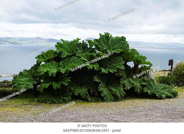 Plant at lakeside, Lakes of Killarney, County Kerry, Republic of Ireland