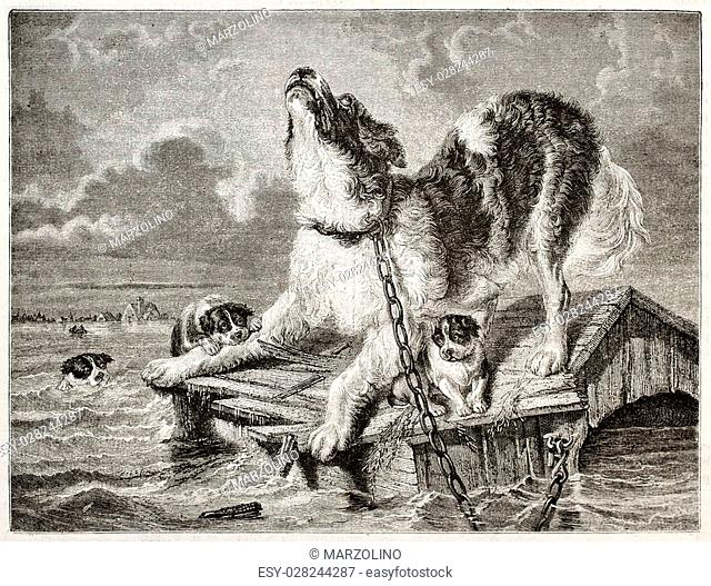 Old illustration of a dog and puppies trying to save from flooding. Created by Freeman and Quartley after Kiorboe, published on Magasin Pittoresque, Paris, 1850