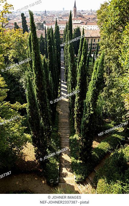 Cypresses along stone stairs, Verona Italy
