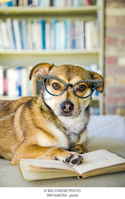 Dog wearing glasses poses with a book