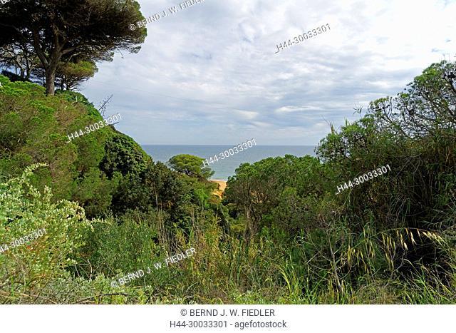 Landschaft, Pinien, Strand, Meer