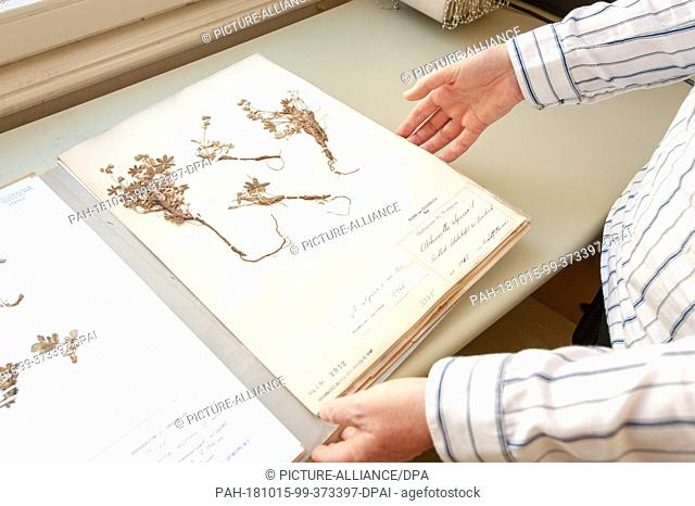 12 October 2018, Austria, Vienna: Alpine mantle from the herbarium of the Institute of Botany in Vienna. With the preserved plants
