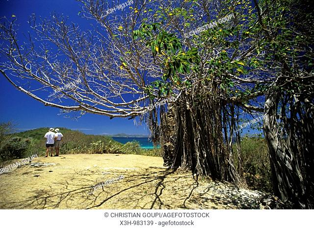 Mayreau,Grenadines islands,Saint Vincent and the Grenadines,Winward Islands,Lesser Antilles,Caribbean Sea
