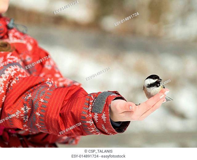 Girl feeding a bird