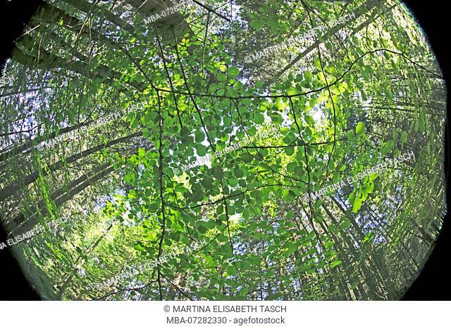 Lush mixed forest, fisheye lens