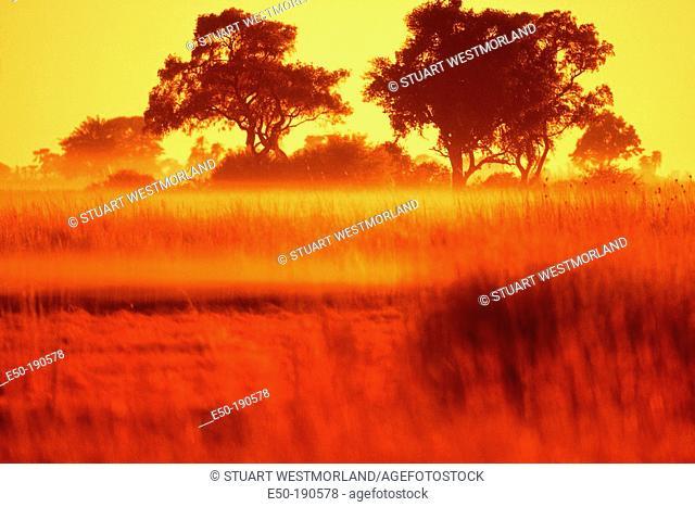 Swamp with morning fog. Botswana