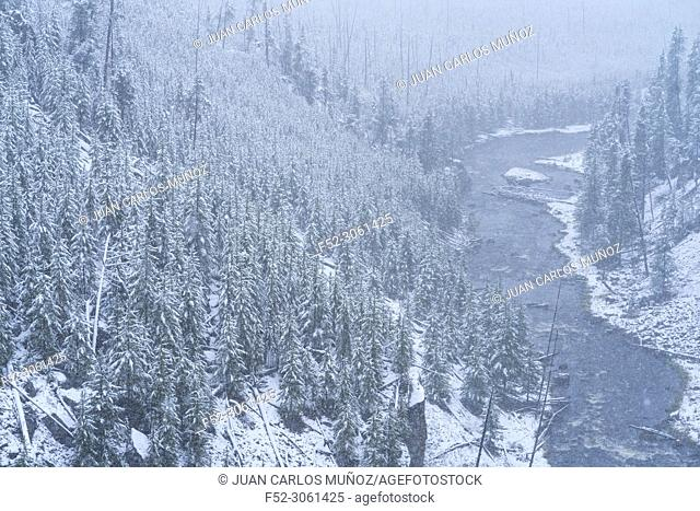 Snowing, Kepler Cascades, Yellowstone National Park, Unesco World Heritage Site, Wyoming, Usa, America