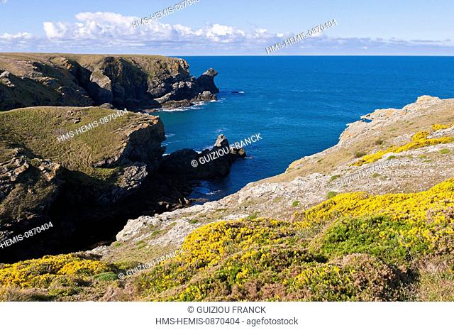 France, Morbihan, Belle Ile en Mer, the wild coast, along the GR340 between the Pointe des Poulains and Herlin beach (Bangor village)