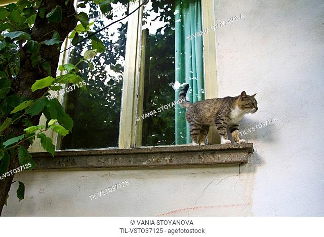 Cat on a ledge looking down toward the ground