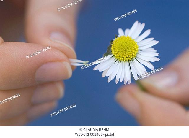 Germany, Bavaria, Man playing game of chance with flower