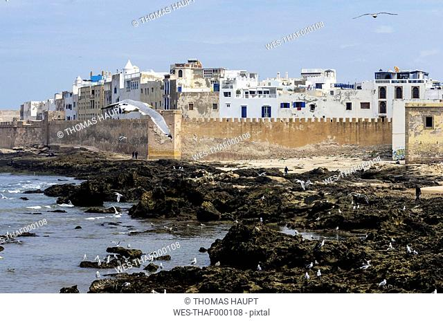 Morocco, Essaouira, Kasbah, seagulls in front of town