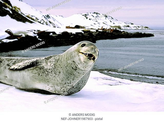 Seal on coast