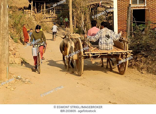 Oxcart on a dusty dirt road, Kyauk Myaung, Myanmar