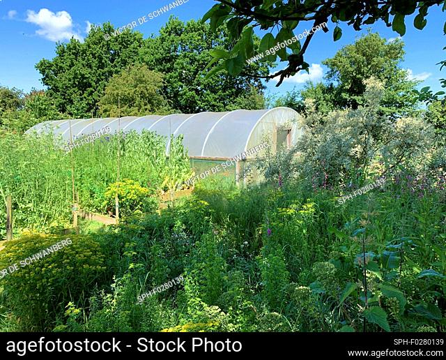 Polytunnel in garden