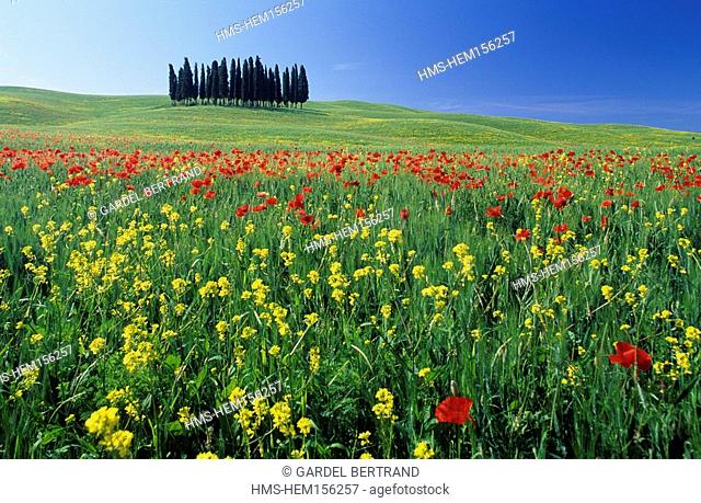 Italy, Tuscany, Orcia Valley, poppy field