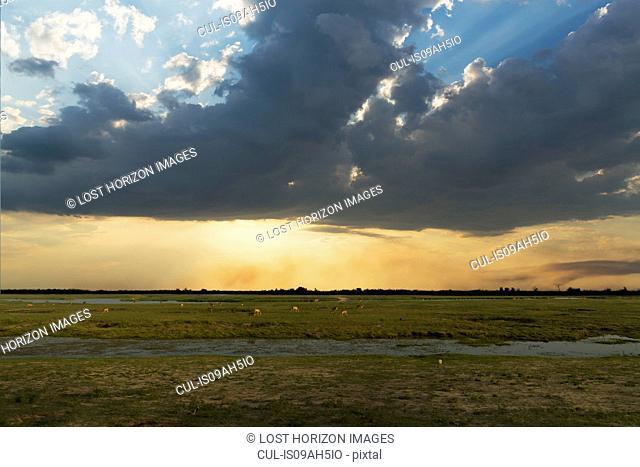 Swampland, Kasane, Chobe National Park, Botswana, Africa