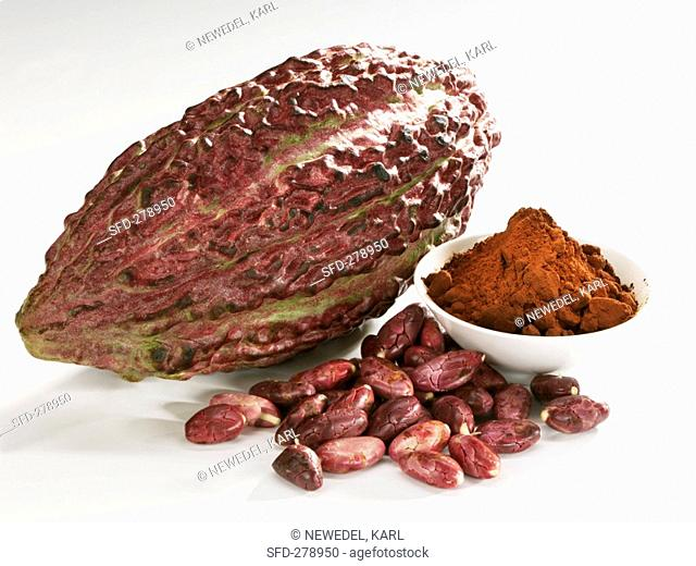 Cacao fruit pod with cocoa beans and cocoa powder