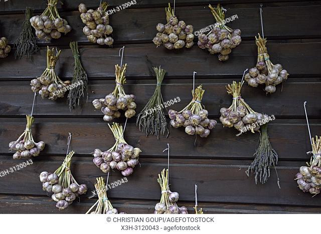bunch of garlic drying, Bacowka Bialy Jelen hotel at Iwkowa village, Brzesko county, Malopolska Province (Lesser Poland), Poland, Central Europe