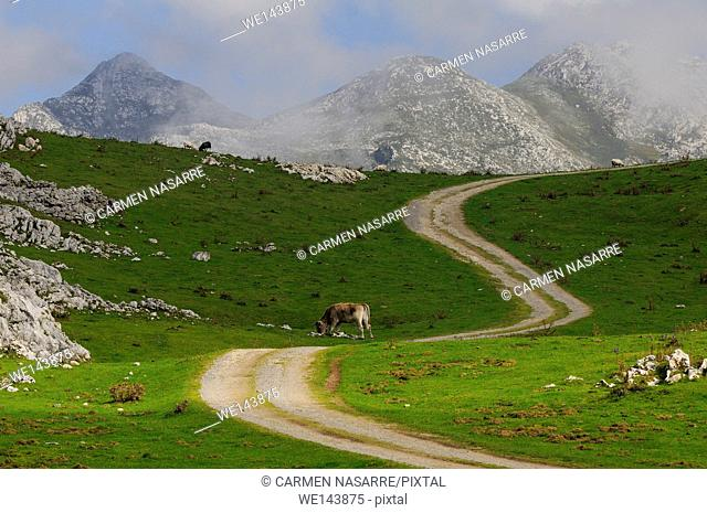 Landscape of Picos de Europa, Asturias