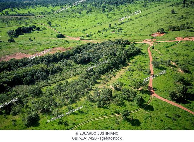 Field and Forest, Aquidauana, Mato Grosso do Sul, Brazil