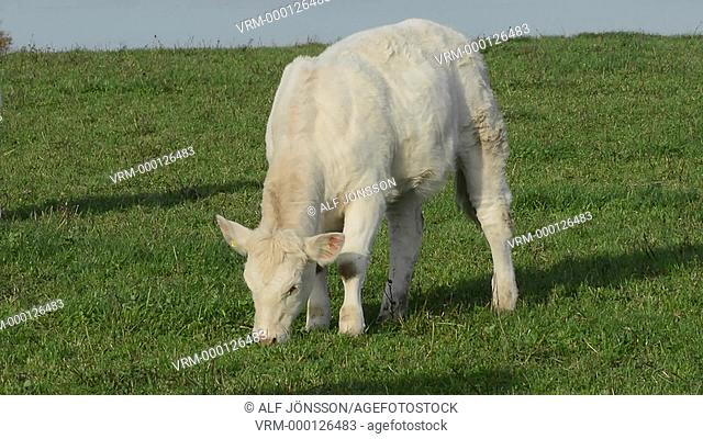Feeding livestock