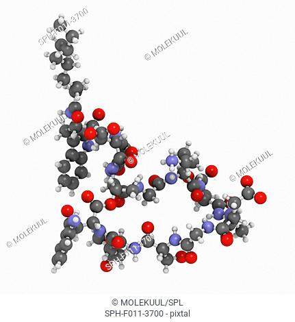 Daptomycin antibiotic drug molecule. Atoms are represented as spheres with conventional colour coding: hydrogen (white), carbon (grey), oxygen (red)