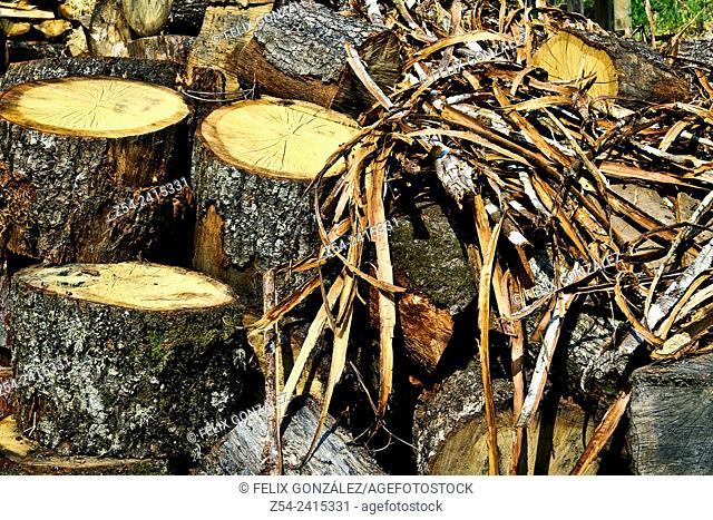 Stack of Firewood, Asturias, Spain