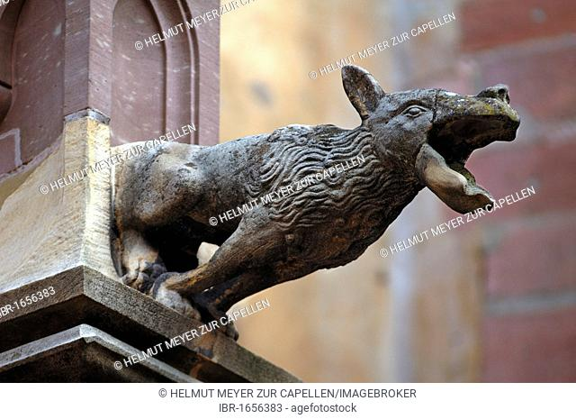Old gargoyle on the Church of Sainte-Croix, Rue du Generall de Gaulle, Kaysersberg, Alsace, France, Europe