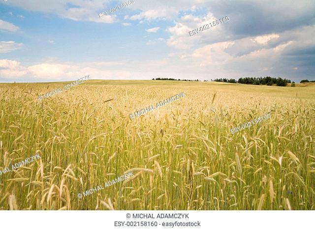 golden yield