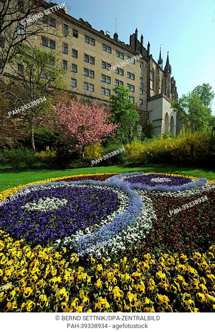 """Blossoming pansies are pictured in front of the castle in Altenburg, Germany, 05 May 2013. THe city celebrates the anniversary """"""""200 Years of Skat"""""""""""