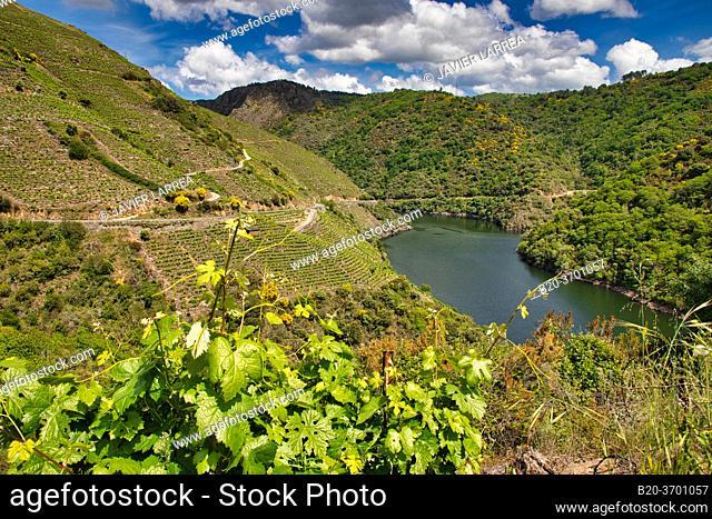 Vineyards, Ribeira Sacra, Heroic Viticulture, Sil river canyon, Sober, Lugo, Galicia, Spain
