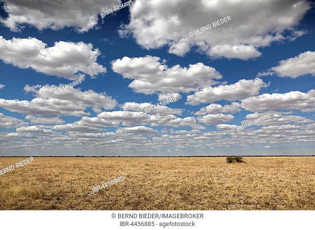 Dry grassland, cloudy sky, Nxai Pan National Park, Botswana