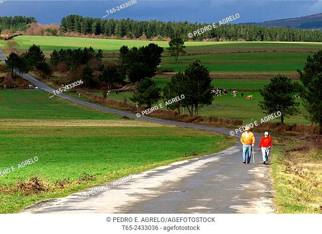Landscape of Galicia, two people walking on a side street. Surrounded by green field, and pasture for cows in Portomarin, Lugo