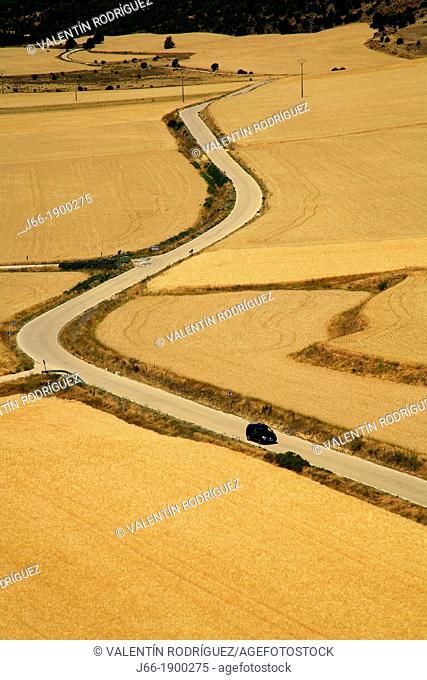 Between Winding Road in Calatañazor cornfields. Soria. Castile and León. Spain