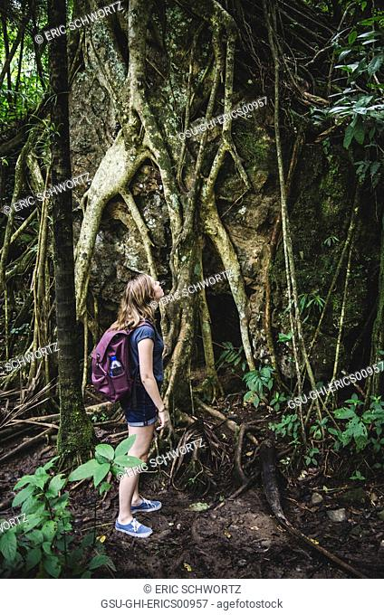 Young Woman Looking Up at Trees, El Yunque Rainforest, Puerto Rico
