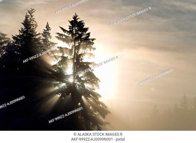 Morning sunrays shine through dense ice fog and trees, Tongass National Forest, Juneau, Southeast Alaska, Winter