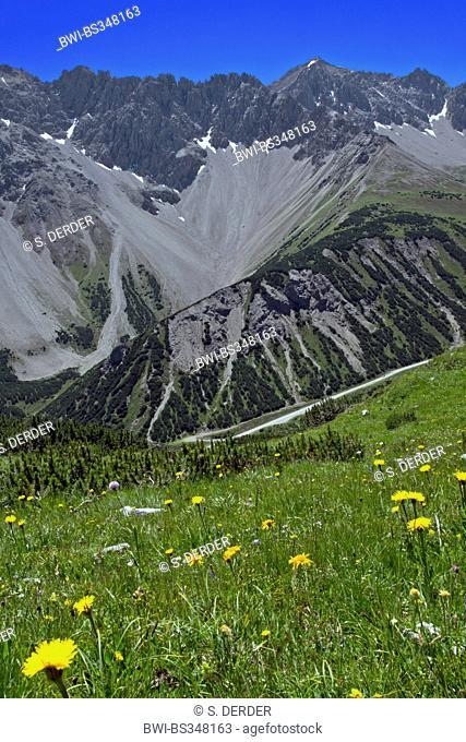 blooming mountain meadow with Maldonkopf and Scharnitzkopf of Lechtal Alps, Austria, Tyrol, Hahntennjoch