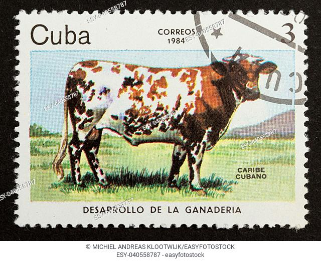 CUBA - 1984: Stamp printed in Cuba shows large cuban cow, 1984