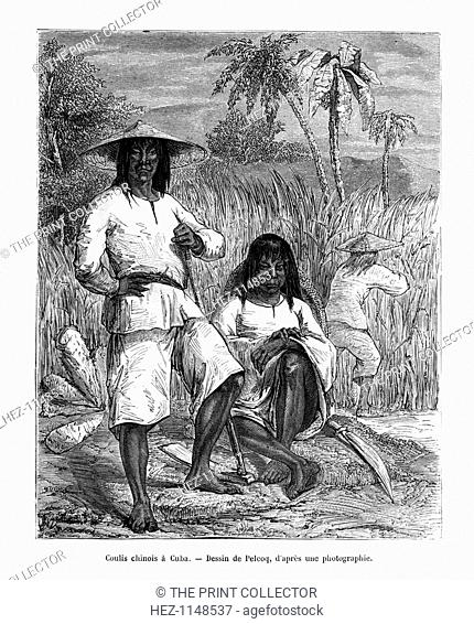 Chinese workers, Cuba, 19th century. Chinese coolies were used as cheap labour. Here they are cutting sugar cane
