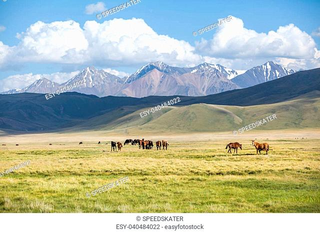 Horses in mountains. Shallow focus on right horses