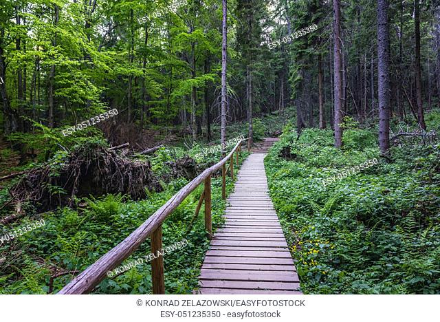 Forest in Wolosate villlage - tourist trail to Tarnica peak in the Bieszczady Mountains in southern Poland, view from a path to Tarnica peak