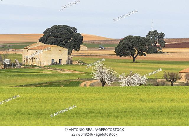 Farmhouse and green sown fields. Corral Rubio. Albacete province. Spain