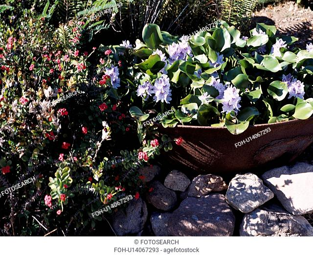 Close-up of blue flowering summer plants in small container