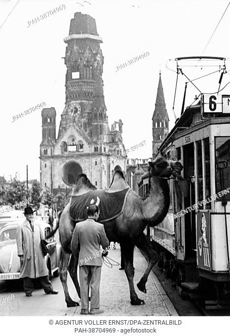 A camel from a circus is píctured next to a street car at Breitscheidplatz in West Berlin, in the background the Kaiser Wilhelm Memorial Church