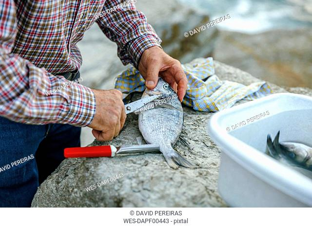 Senior man cutting fins of caught fish
