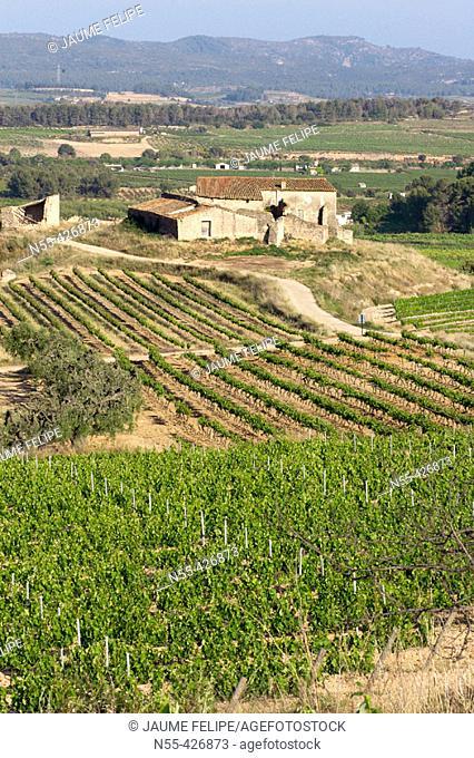 Vineyards and 'masia' (typical farmhouse) in La Múnia, Alt Penedès. Barcelona province, Catalonia. Spain