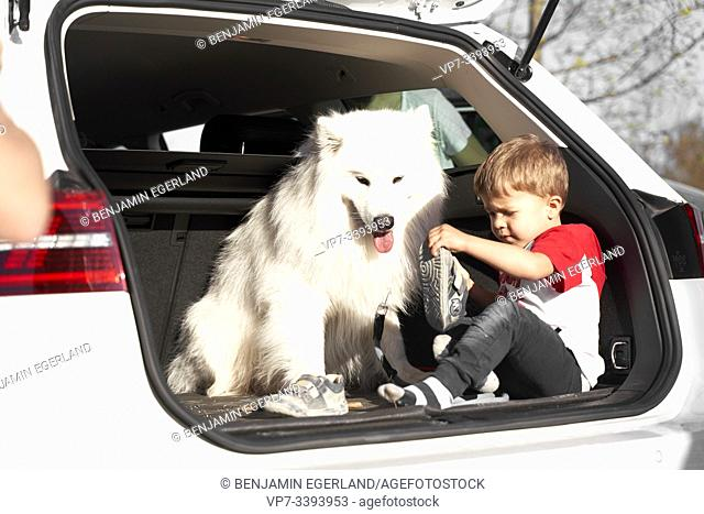 toddler child with dog in car boot, undressing shoes