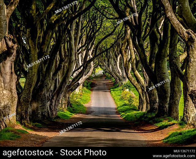 Amazing Dark Hedges in Northern Ireland - travel photography