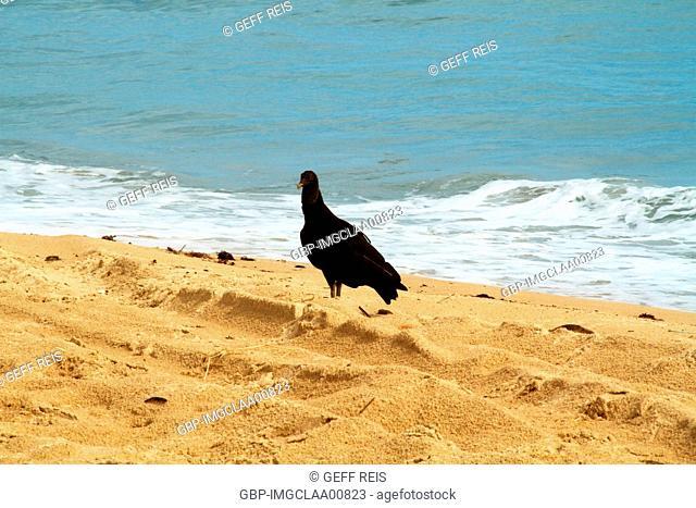 Pititinga beach, Rio do Fogo, Rio Grande do Norte, Brazil