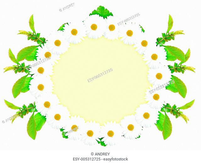 Ellipse frame with white flowers